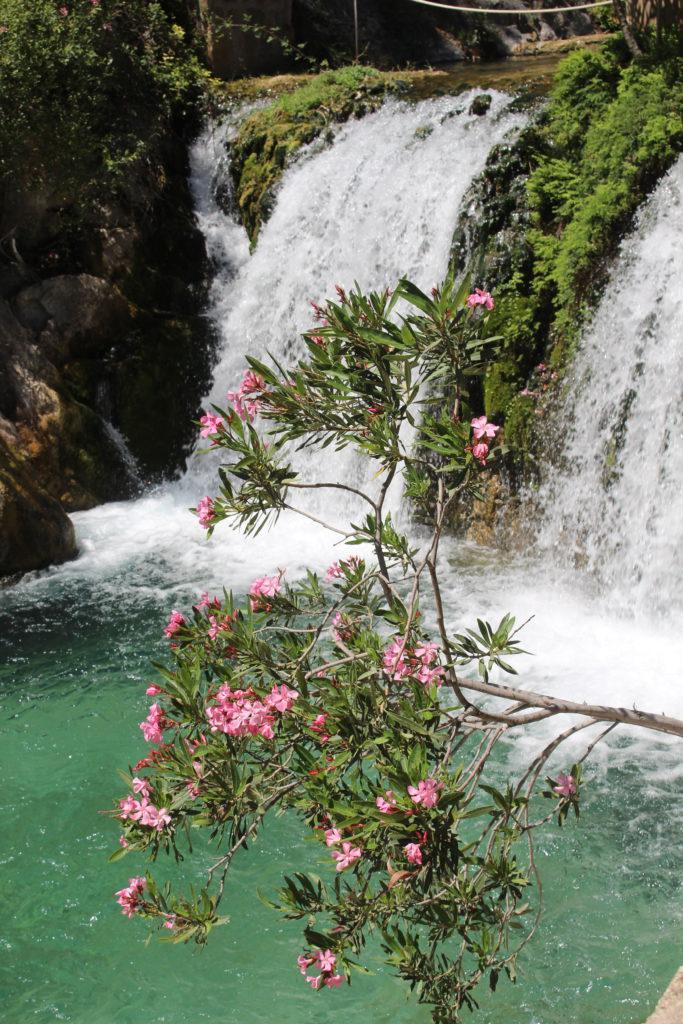 Wasserfälle & Oleander der Fonts de L'Algar